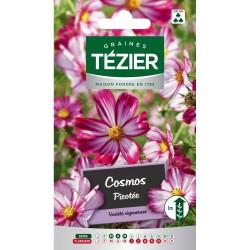 Tezier - Cosmos Picotée Fleurs annuelles