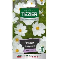 Tezier - Cosmos Purity Blanc Fleurs annuelles