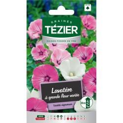 Tezier - Lavatère à grande fleur variée Fleurs annuelles