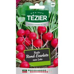 Tezier - Radis Rond Ecarlate race Loto
