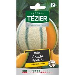 Tezier - Melon Anasta HF1