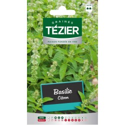 Tezier - Basilic Citron