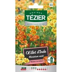 Tezier - Oeillet D'Inde miniature varié -- Fleurs annuelles