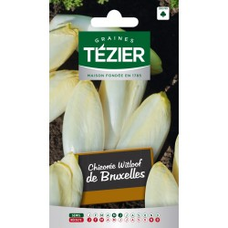 Tezier - Chicorée Witloof (endive) Platine HF1