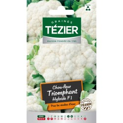 Tezier - Chou-fleur Triomphant HF1