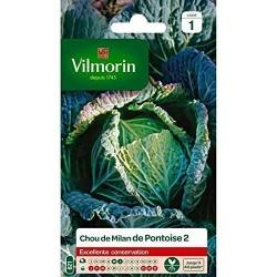 Vilmorin - Chou Milan De Pontoise