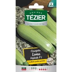 Tezier - Courgette Lorea HF1