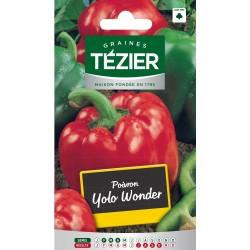 Tezier - Poivron Yolo Wonder