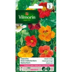 Vilmorin - Capucine Alaska en mélange