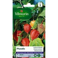 Vilmorin - Physalis Lanterne Chinoise