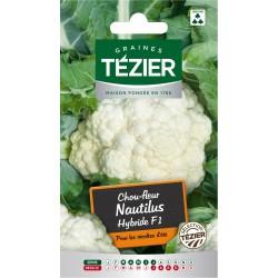 Tezier - Chou-fleur Nautilus HF1