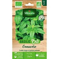 Vilmorin - Basilic Genovese Bio