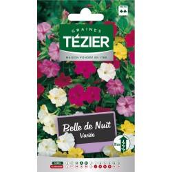 Tezier - Belle de Nuit variée -- Fleurs vivaces