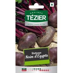 Tezier - Betterave noire d'Egypte