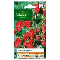 Vilmorin - Fraisier 4 Saisons Suprême