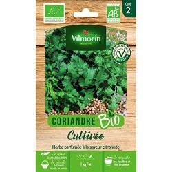 Vilmorin - Coriandre Cultivée Bio