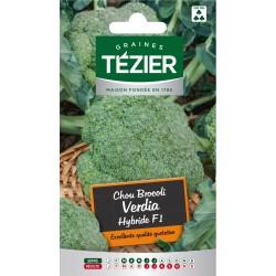 Tezier - Chou Brocoli Verdia