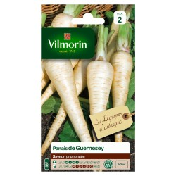 Vilmorin - Panais de Guernesey