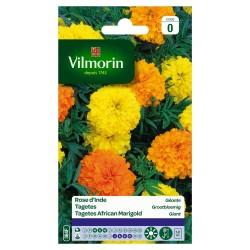 Vilmorin - Rose d'Inde Geante Serie 0
