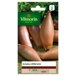 Vilmorin - Echalion Zebrune