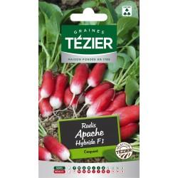 Tezier - Radis Apache HF1