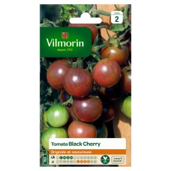 Vilmorin - Tomate Black Cherry