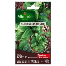 Vilmorin - Mâche Agathe - SDJ