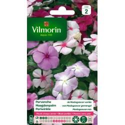 Vilmorin - Pervenche De Madagascar Variée