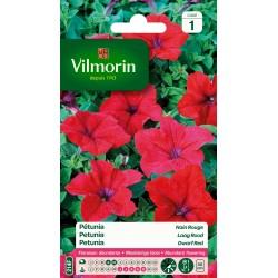 Vilmorin - Pétunia Nain Rouge