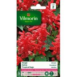 Vilmorin - Sauge Rouge Brasier