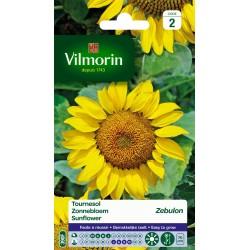 Vilmorin - Tournesol Zebulon