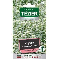 Tezier - Alysse Corbeille d'argent - Fleurs annuelles