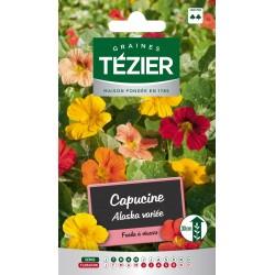 Tezier - Capucine Alaska variée -- Fleurs annuelles