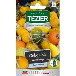 Tezier - Coloquinte en mélange -- Fleurs annuelles