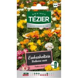 Tezier - Eschscholtzia Ballerine variée -- Fleurs annuelles