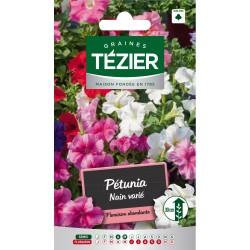 Tezier - Pétunia nain varié -- Fleurs annuelles