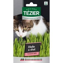 Tezier - Herbe à chat -- Fleurs annuelles