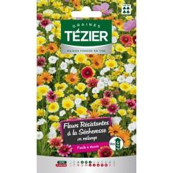 Tezier - Mélange de Fleurs résistant à la sécheresse