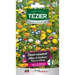 Tezier - Mélange de Fleurs couvrant allée et bordure