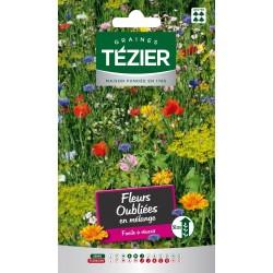 Tezier - Mélange de Fleurs oubliées -- Fleurs annuelles