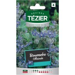 Tezier - Bourrache officinale