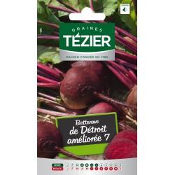 Tezier - Betterave de Détroit améliorée 7