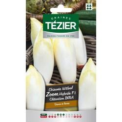 Tezier - Chicorée de Bruxelles Zoom HF1 obtention INRA