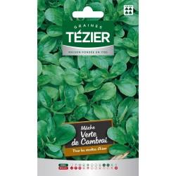 Tezier - Mâche Verte de Cambrai