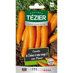 Tezier - Carotte de Colmar à cœur rouge 2 race Flamir
