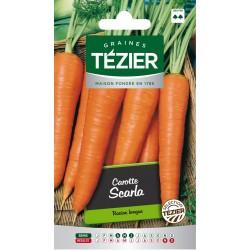 Tezier - Carotte Scarla