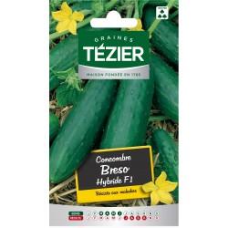 Tezier - Concombre Breso HF1