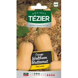 Tezier - Courge Waltham Butternut