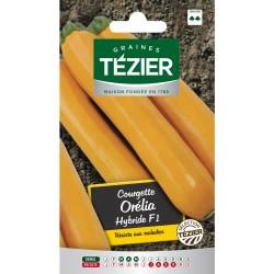 Tezier - Courgette Orelia HF1