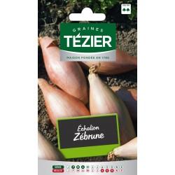 Tezier - Echalion Zébrune